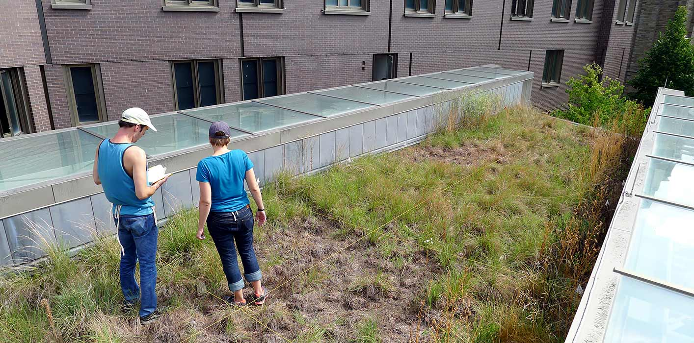<p>We perform post-occupancy analysis long after our buildings are complete, as in this study about how green roofs function and change over time.</p>