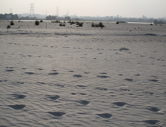 A typical sandfilled environment, in which most of the natural ecology has been erased.