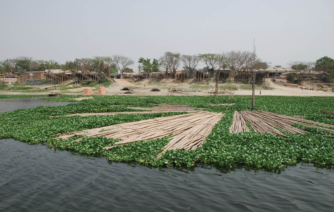 <p>Bamboo floats atop invasive water hyacinth on the Bongshi River.</p>