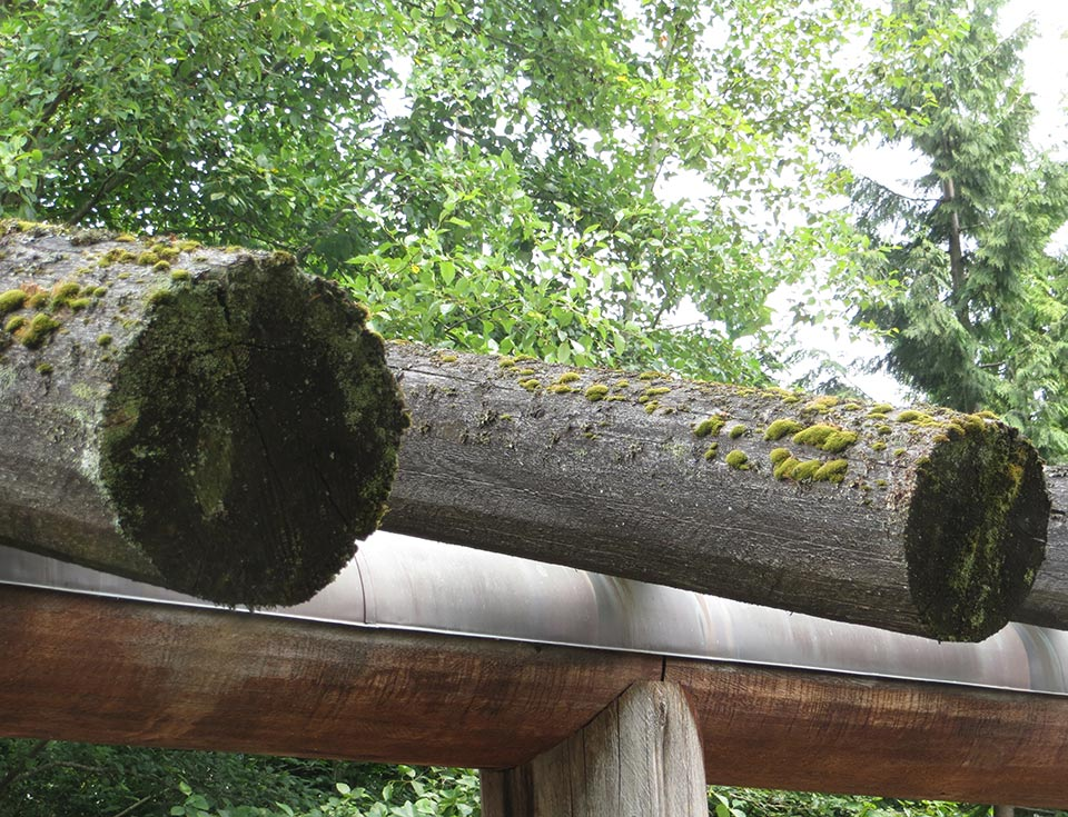 Moss will grow on virtually any material in Seattle's moist climate, including the wood logs shown here.