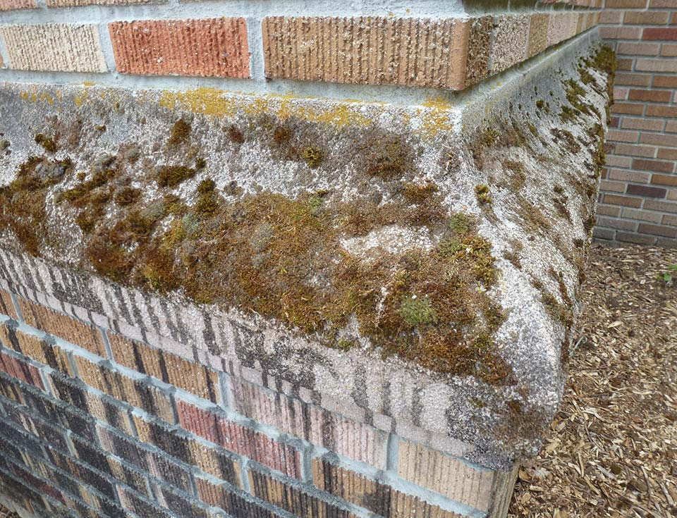 While moss can grow on anything from wood to stone, it has the advantage of improving air quality and absorbing particulate matter from its environment.